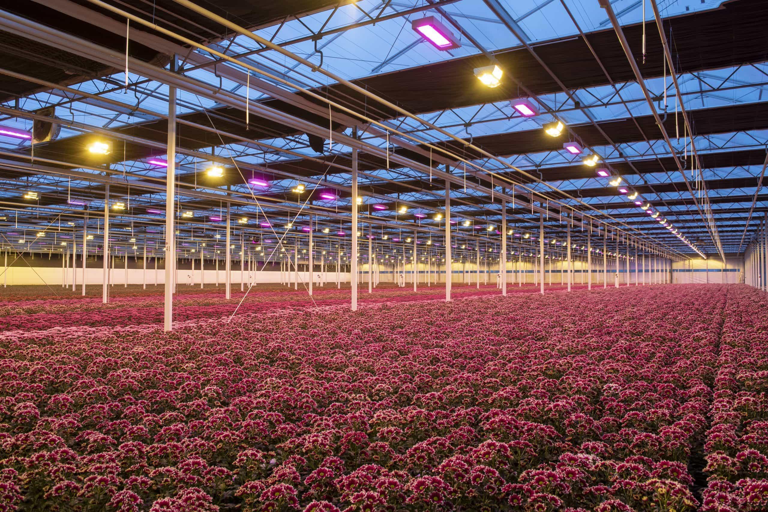 """Ledgnd reageert op artikel Goedemorgen Potplant: """"LED in opmars maar wel in combinatie met HPS"""""""