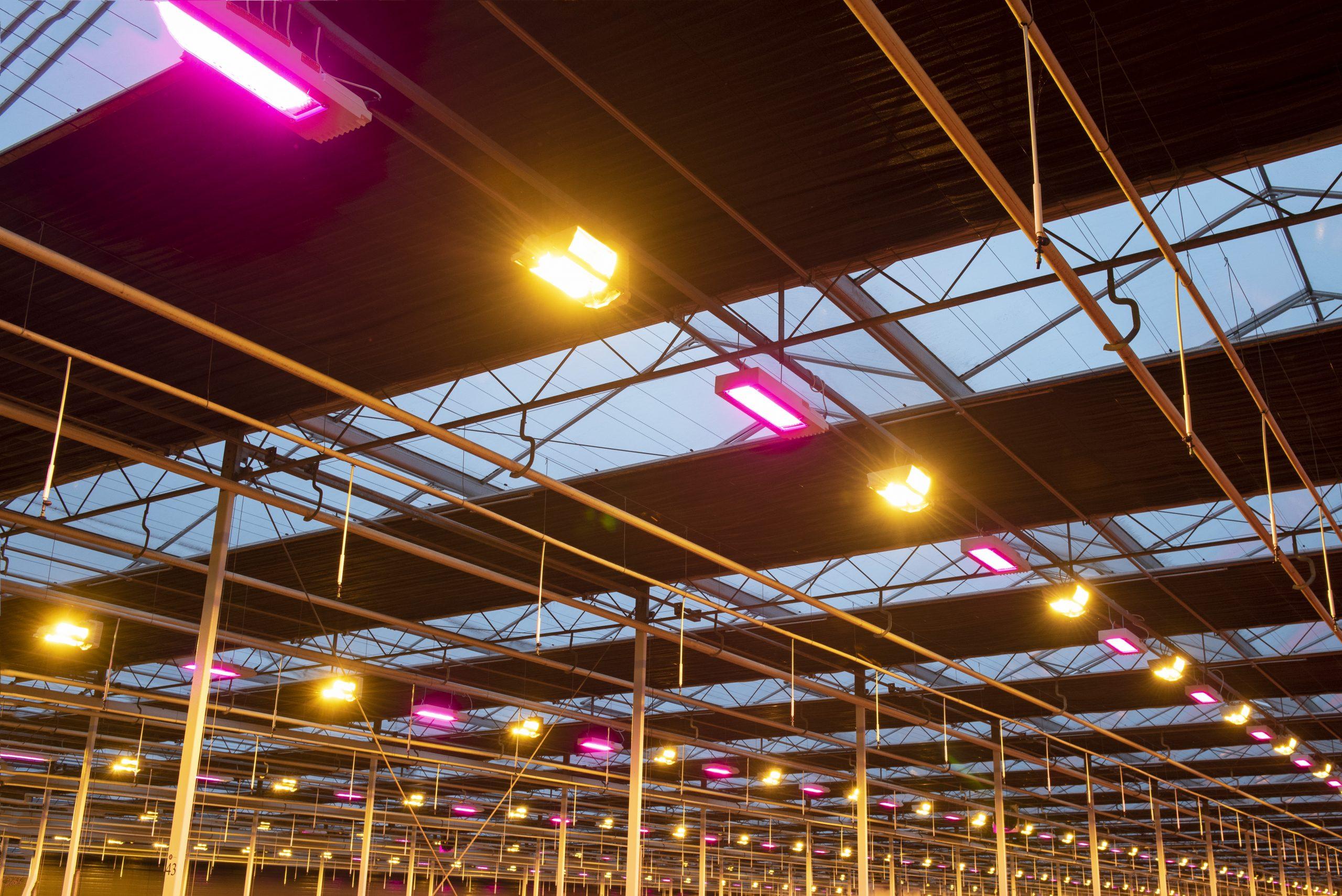 Verheldering op LED subsidie in de glastuinbouw